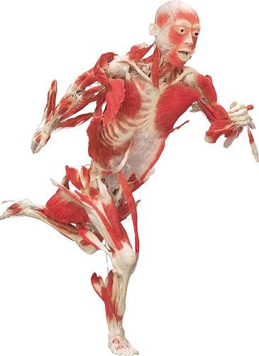Anatomía y biomecánica