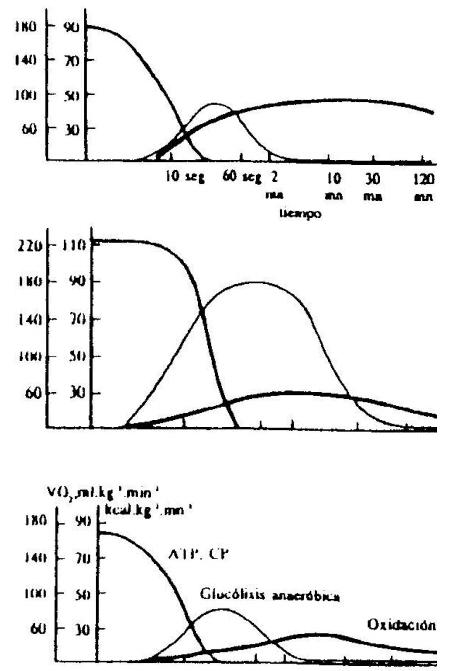 Procesos Energéticos y Actividad Física - Actividades