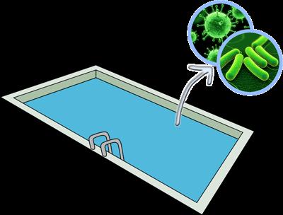 Bacterias Piscina
