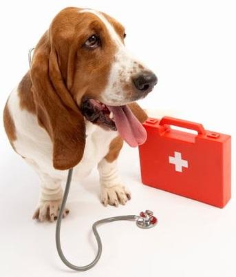 Primeros Auxilios Perro