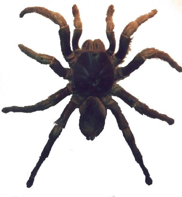 Socorrismo arañas
