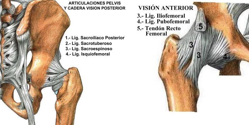 Anatomía y biomecánica - Anatomía - Cuerpo Humano - TAFAD - TAFAD y ...