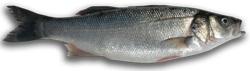 Pescado Calorías, Lípidos, Proteínas e Hidratos de Carbono