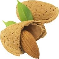 Frutos Secos Calorías, Lípidos, Proteínas e Hidratos de Carbono