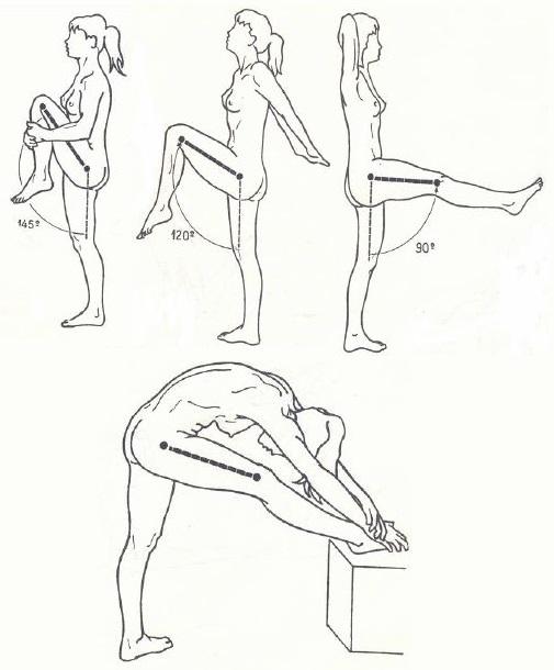 Flexión de la Cadera