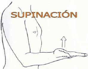 Pronación y Supinación del Codo