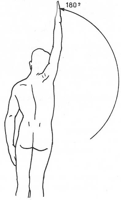 Amplitud de Movimiento - Anatomía - Cuerpo Humano - TAFAD - TAFAD y ...